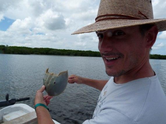 sujetando cucaracha de mar